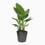 Lowes: 40% off select Costa Farms House Plants
